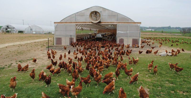Cách làm chuồng nuôi gà thả vườn